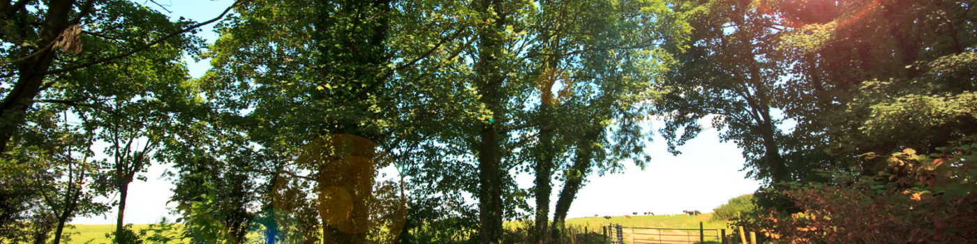 Rura walk by caravan park near Lytham